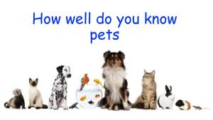 thumbnail of Pets Quiz